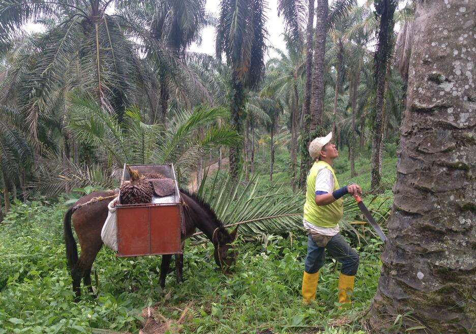 Four Ways to Get the Most out of Palm Oil in Latin America and the Caribbean